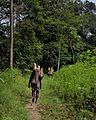 Hutan sebagai Keluarga bagi masyarakat sungai utik.jpg