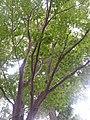 I like green tree 2013-11-17 14-20.jpg