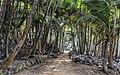 Ile Saint-Joseph sentier du tour de l'île.jpg