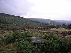 Ilkla Moor - heather.jpg