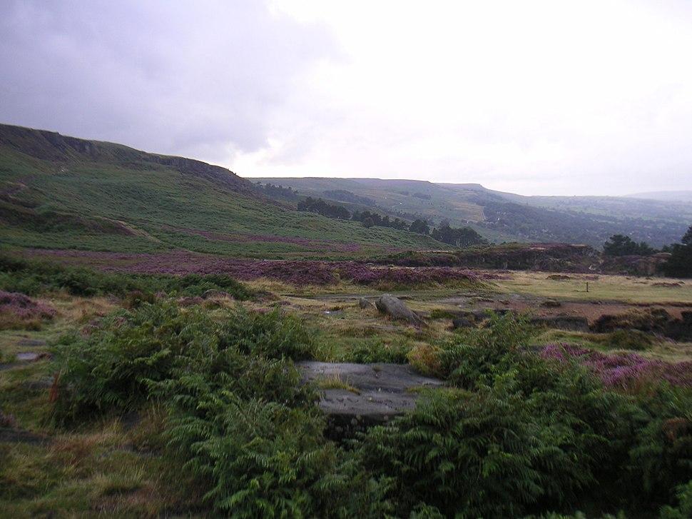 Ilkla Moor - heather