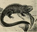 "Image from page 153 of ""Water reptiles of the past and present"" (1914) (14750033516).jpg"
