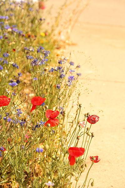 File:Impressionist Wildflower Garden Creative Commons (4798430560).jpg