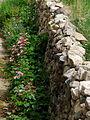 India - Ladakh - Leh - 004 - Guesthouse garden (3841432867).jpg