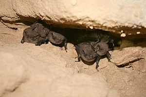 Approximately seven bats are visible clustered together in an indentation in the cave ceiling.