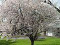 Indy - days of springs (2424594986).jpg