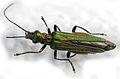 Insecto, Bastavales, Brión, Galiza, 090630 20.JPG