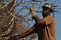 Installing razor wire at Camp XRay, Guantanamo.jpg