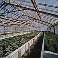 Interieur potplantenkas - Aalsmeer - 20404727 - RCE.jpg