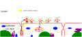 Invasion virulence bacteria.png