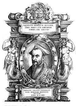 Ippolito Salviani 1514-1572.jpg