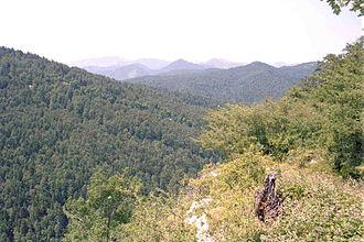 Irati Forest - Irati Forest