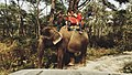 It's an unspoken rule to go on an elephant ride while you're in chitwan.jpg