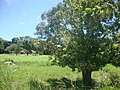 Itarumã - State of Goiás, Brazil - panoramio (14).jpg