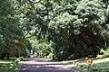 Jardim José do Canto, Ponta Delgada, ilha de São Miguel, Açores.JPG