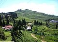 Jawalakhel, Patan 44700, Nepal - panoramio (48).jpg