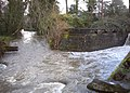 Johnson creek SE 41st weir jct P2138.jpeg