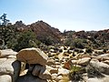 Joshua Tree Nationalpark Hidden Valley Nature Trail P4140421.jpg