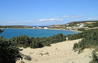 Juniperus macrocarpa - Juniperus macrocarpa in typical sand dune habitat, Paros Island, Greece