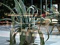 Kaktus (58073523).jpg
