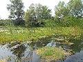 Kanivs'kyi district, Cherkas'ka oblast, Ukraine - panoramio - юра запеченко (16).jpg