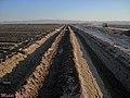Kavir National Park, Agriculture in the desert and salt marsh, Tehran کشاورزی و مزرعه پسته در کویر، مبارکیه، ورامین - panoramio.jpg