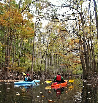 Congaree National Park - Kayakers paddle on Cedar Creek