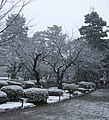 Kenrokuen in snow.jpg