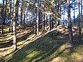 Kiefernwald bei Klausdorf - panoramio.jpg