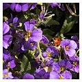 Klein 2016-04-30 11.52 NIMAGAYAMA Garten - Marienkäfer.jpg