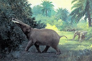 Sonora - Gomphotheres (reconstructed) were hunted in Sonora by ancient Clovis hunters.