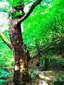 Koleshino Waterfall ,19.JPG