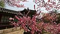Korea Palace Spring Flowers 09.jpg