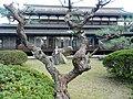 Kotohira Assembly Hall 琴平公會堂 - panoramio (1).jpg