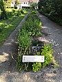 Koulupuisto, kukkaisbiologia ja siementen leviäminen.jpg