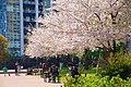 Kounan-ryokusui-park2.jpg