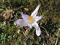 Květ 9917.jpg