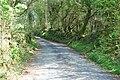 Lôn i goedwig Tir Stent - Road to Tir Stent forest - geograph.org.uk - 415587.jpg