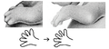 L27. Separate phalanges are visible in the fingers (V12u).png