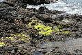 La Palma - Villa de Mazo - La Salemera - Lugar Playa La Salemera 11 ies.jpg