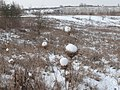 La RNR du site géologique de Limay sous la neige.jpg