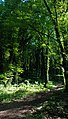 Lagodekhi.Forest (Photo by Joar Wandborg, 2011).jpg