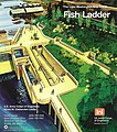 Lake Washington Ship Canal Fish Ladder pamphlet 01.jpg