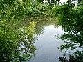 Lake in the wood - geograph.org.uk - 1985061.jpg