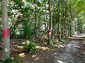 Landart in Putten Trees dressed with knitting ware.jpg