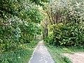 Landschaftsschutzgebiet Wäldchen bei Buer Melle Datei 19.jpg