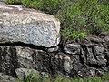 Large anorthosite xenolith in ophitic ilmenite gabbro (anorthosite series, Duluth Complex, Mesoproterozoic, 1099 Ma; Keene Creek East Skyline Parkway roadcut, Duluth, Minnesota, USA) 6 (22040941769).jpg