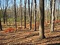 Lasdon Park and Arboretum, Somers, NY - IMG 1472.jpg