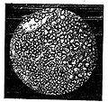Le pain et la panification - Fig. 9.jpg