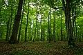 Leaf Forest.jpg